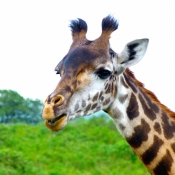 Arusha-National-Park-7