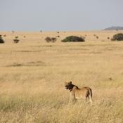 Serengeti Safari-43