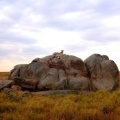 Serengeti Safari-19