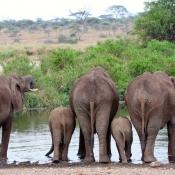 Serengeti Safari-20