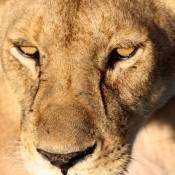Serengeti Safari-8