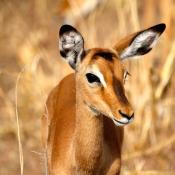 Serengeti Safari-9