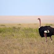 Serengeti Safari-11