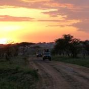 Serengeti Safari-16
