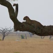 Serengeti Safari-3