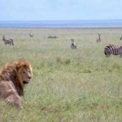 Serengeti Safari-7