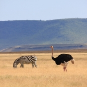 Ngorongoro Crater-20