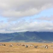 Ngorongoro Crater-17