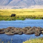 Ngorongoro Crater-6
