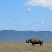 Ngorongoro Crater-12