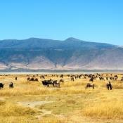 Ngorongoro Crater-4