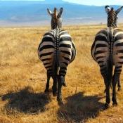 Ngorongoro Crater-5