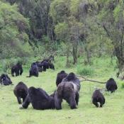 Gorilla-Trekking-9