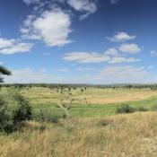 Tarangire-National-Park-13