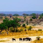 Tarangire-National-Park-7