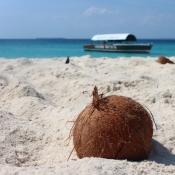coconut-1577282