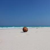 coconut-1582163