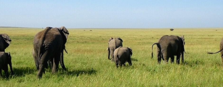 Serengeti-National-Park