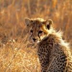 Kenya-Tanzania-Safari-6