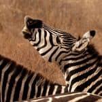Tanzania Kenya Safari