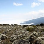Kilimanjaro-Trekking-11