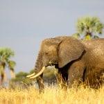 Elephant-in-Tarangire-National-Park