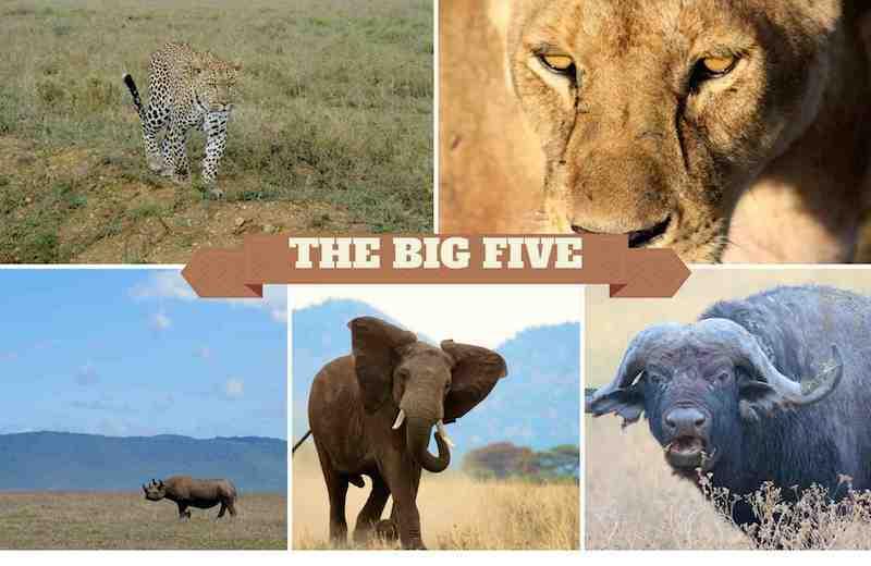 Die Gesichter von Afrikas Big Five