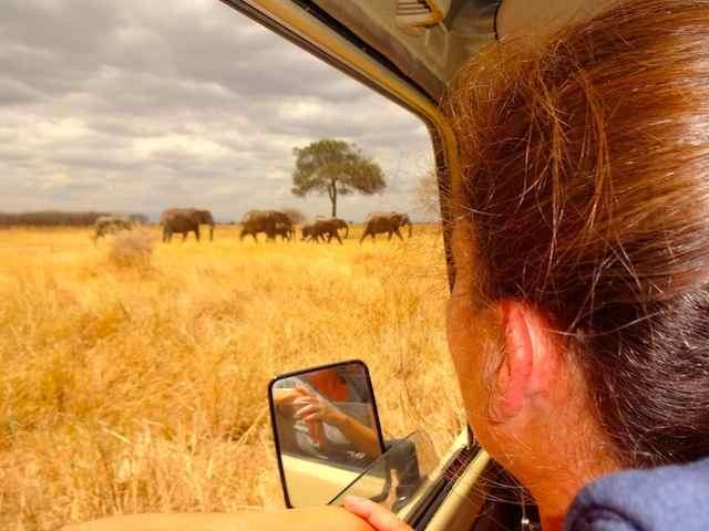 Kenia Tansania Safaris