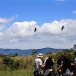 Serengeti-Ngorongoro-Crater-Safari-3