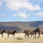 Serengeti-Ngorongoro-Crater-Safari-2