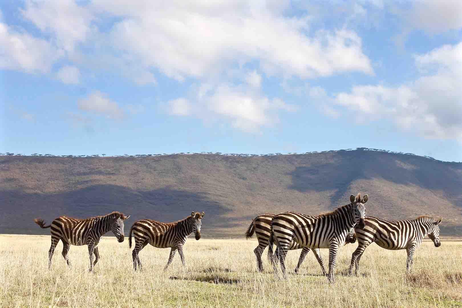 Serengeti-Ngorongoro-Crater-Safari-2