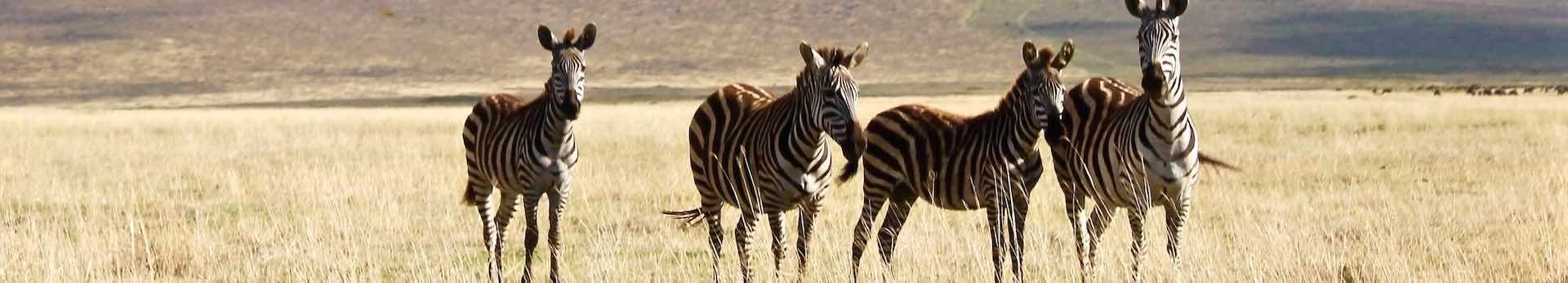 Ngorongoro-Header