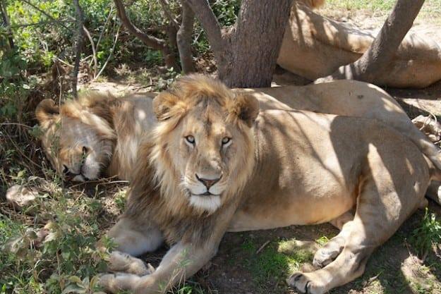 My Top 5 Safari Experiences