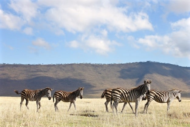 My 5 Best Safari Experiences