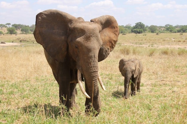 My 5 Best Safari Experiences