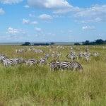 Kenya-Tanzania-Safari-7