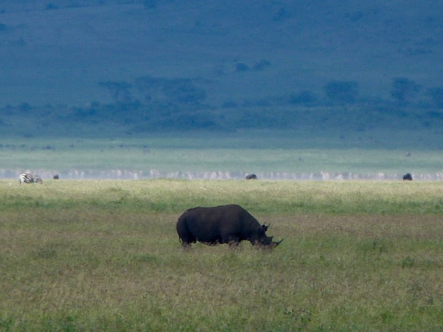 Ngorongoro-Crater-Rhino