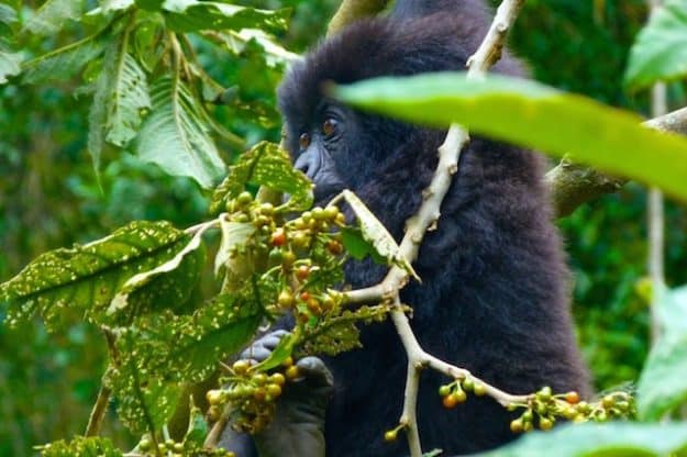 Aktivitäten Ruanda
