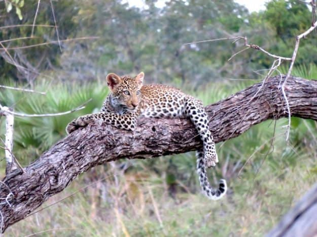 Tansania Hochzeitsreise