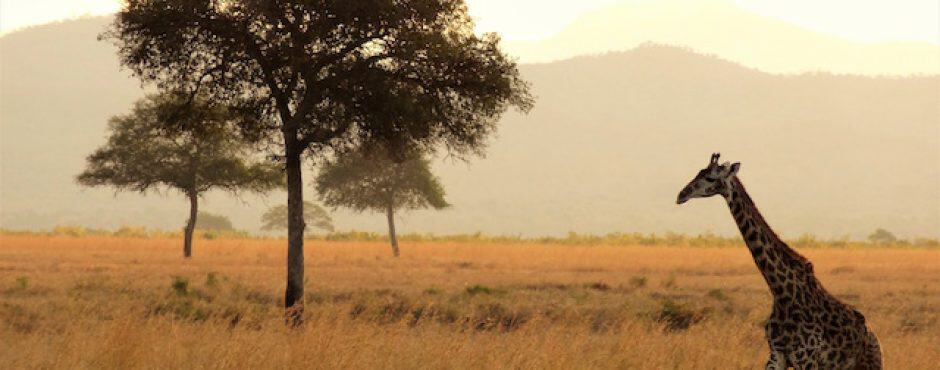 Tanzania Blog - The Soul Of Africa | Viva Africa Tours