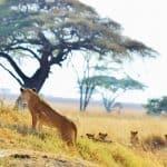 Kenya Tanzania Zanzibar-6
