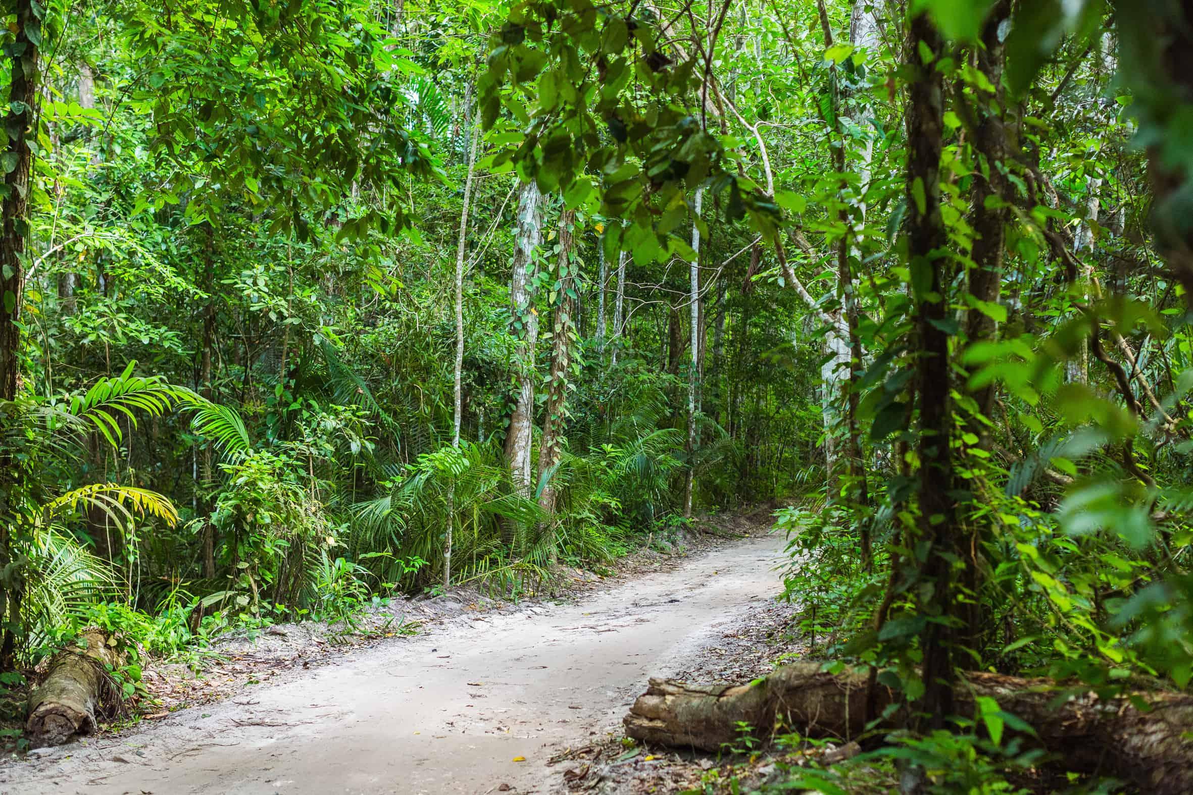 Ngezi-Forest-Pemba