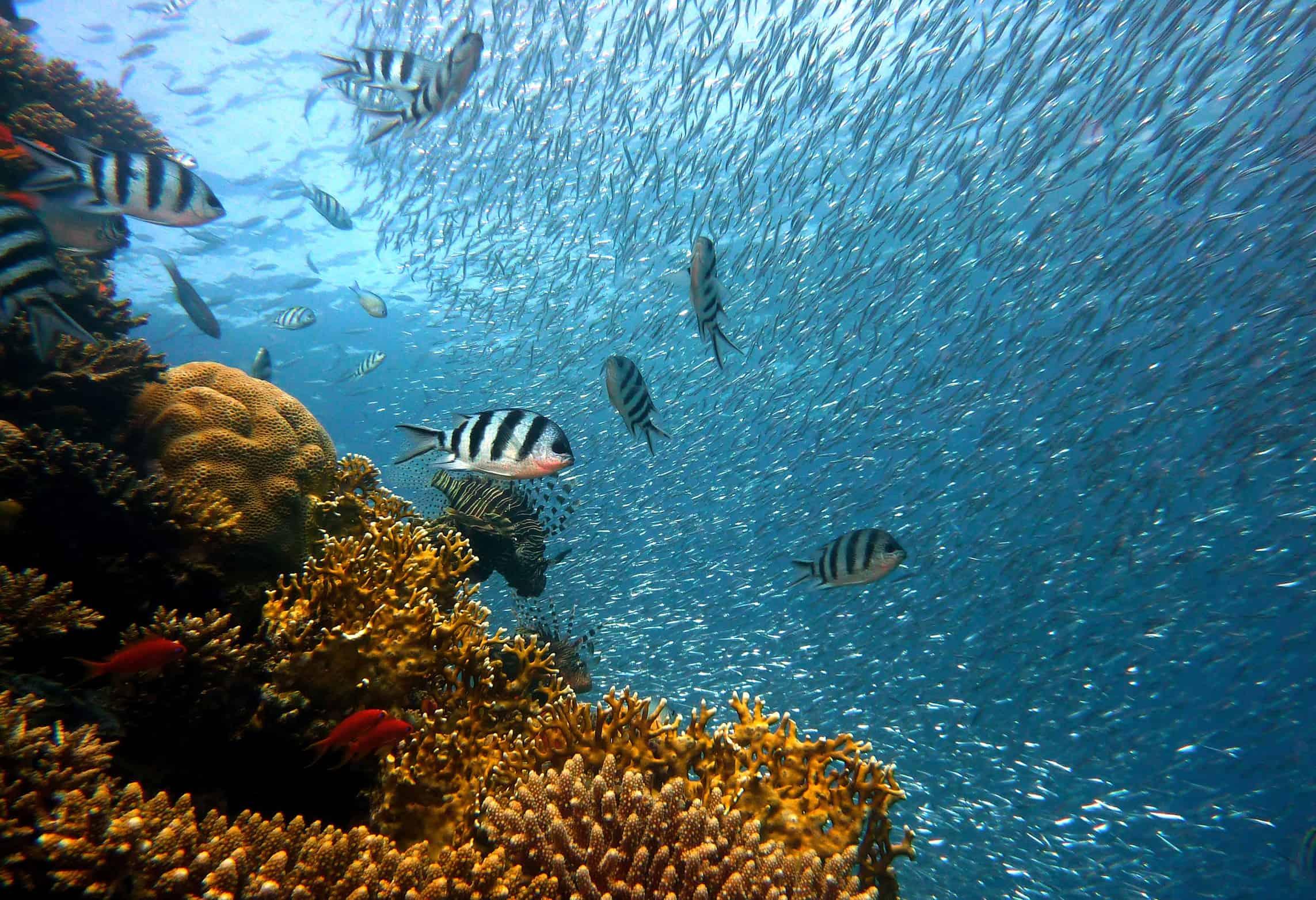 Diving-Zanzibar